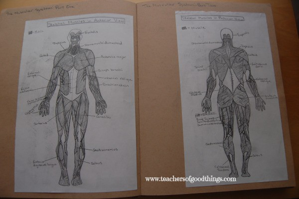 A is for Anatomy Journaling Ideas