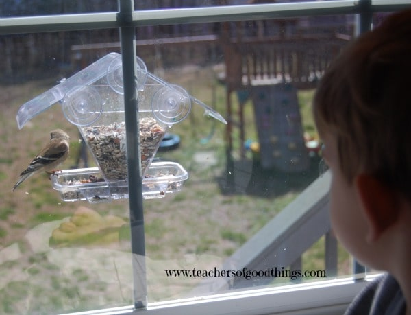 How to #Study #Birds with FREE #printable @Titus2Teacher www.joyinthehome.com shares #homeschool tips that she has used to #teach #bird observation