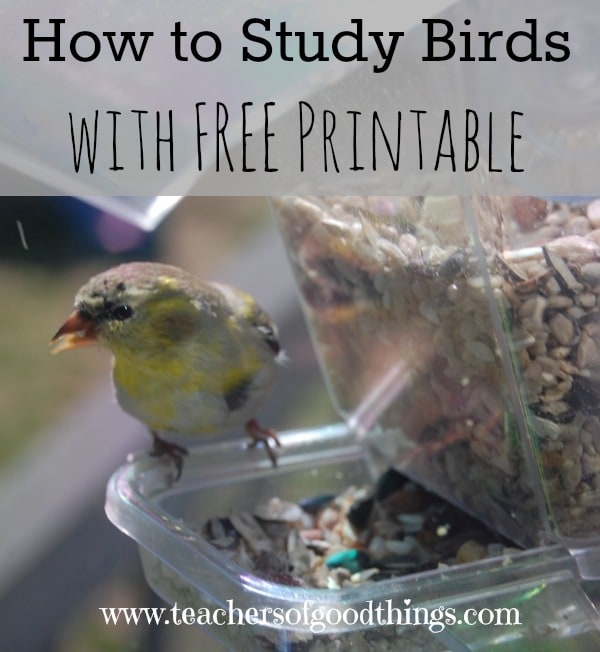 How to Study Birds with FREE Printable