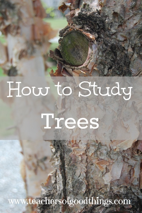How to Study Trees - tips of how to easy learn to identify trees