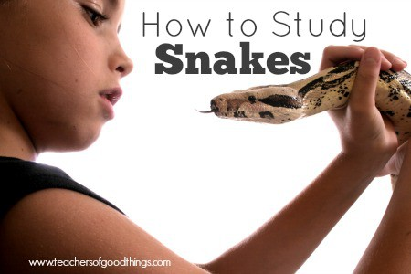 How to Study Snakes