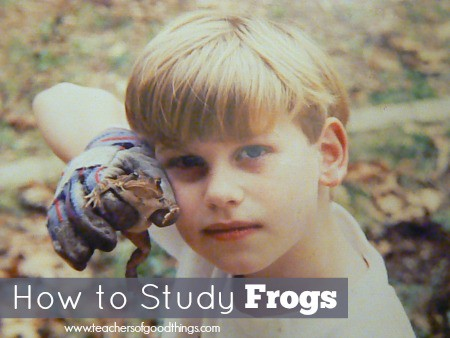 how to study frogs www.joyinthehome.com.jpg