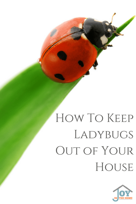 How to Keep Ladybugs Out of Your House