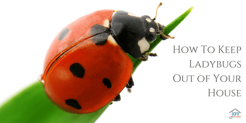 How to Keep Ladybugs Out of Your House | www.joyinthehome.com